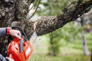 tree_branch_cutting_ts